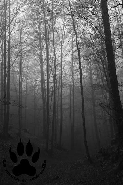 foret-brouillard-ilirska-bistrica-slovenie