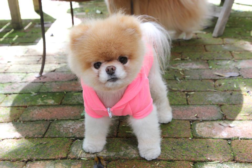 Whitelady Popular World S Cutest Dog