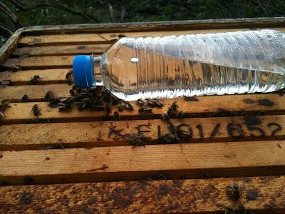 Τροφοδοσία μελισσιών με την μέθοδο του μπουκαλιού!!! video