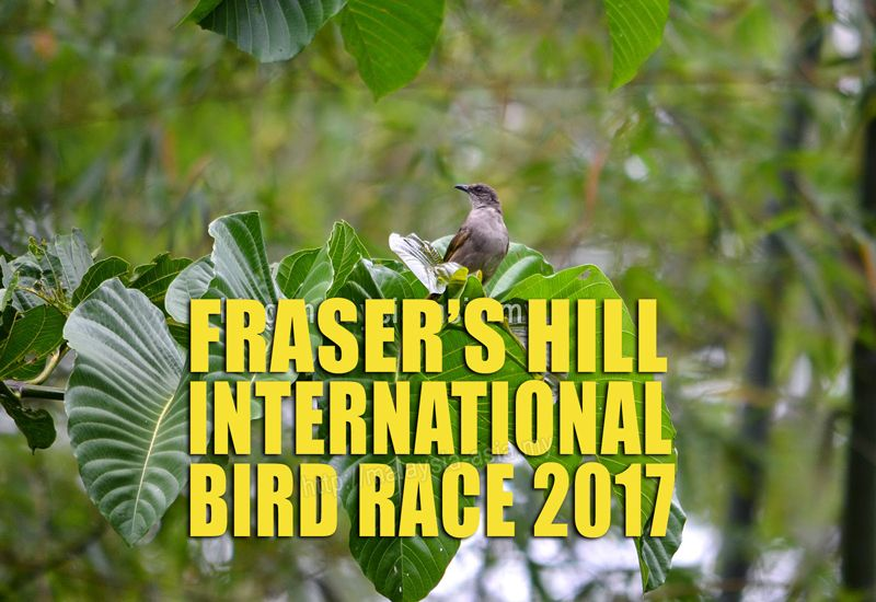 Fraser's Hill International Bird Race 2017