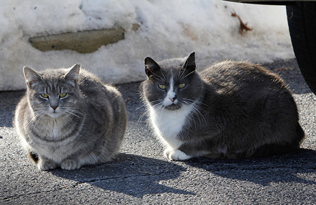 keeping feral cats safe in winter