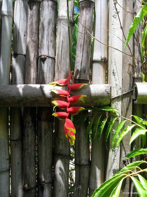 Fiji, Flora. Tropical plant, garden