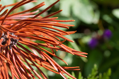 Needles of a conifer.