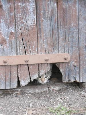 chat décembre, Lalinde, malooka