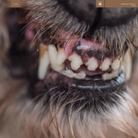 The Top 50 Albums of 2017: 05. Blanck Mass - World Eater