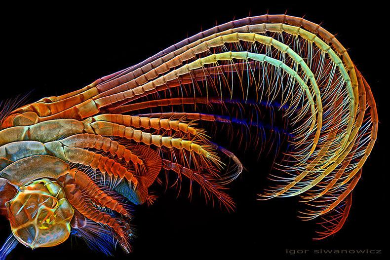 Las criaturas más pequeñas capturadas utilizando microscopio de escaneo por láser