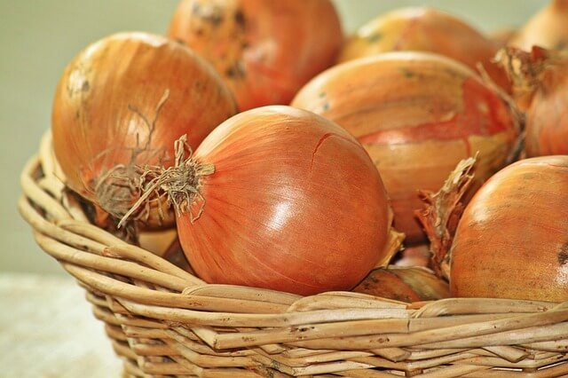 Onion feed is useful for preventing diabetes