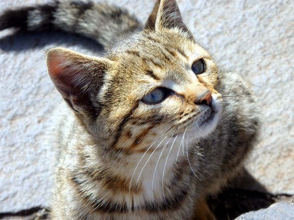 holiday destinations for cat lovers