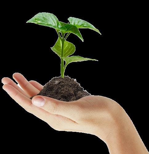 علوم الطبيعة والحياة: مذكرات الميدان الثاني: التغذية عند ...