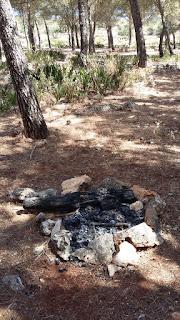 Fuego en los pinos de Gilena