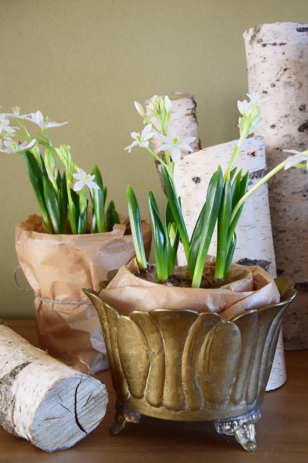 DIY Verschönerung Übertopf Übertöpfe Vasen für den Frühling. Dekoidee Deko Dekoration mit Frühjahrsblühern