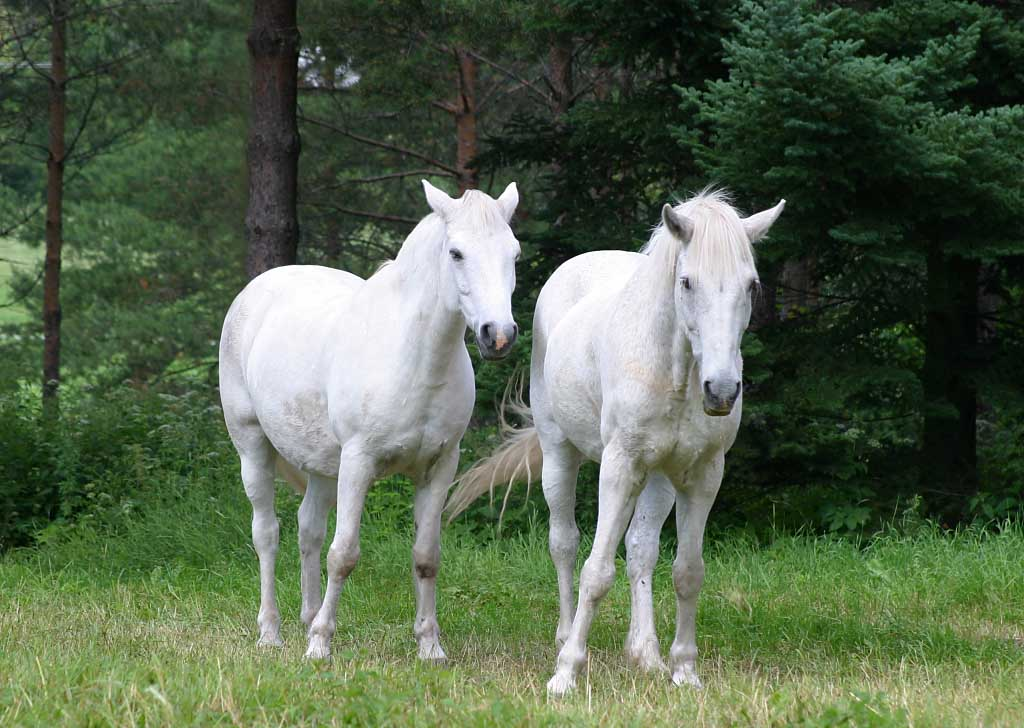Nice 3d Wallpaper Nice Pictures White Horses