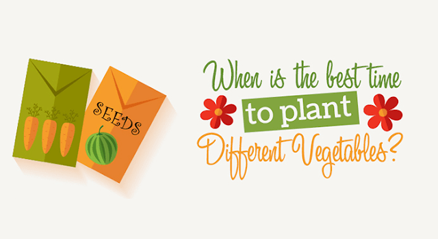 When is the Best Time to Plant Different Vegetables