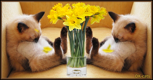 Photoshopped Cat picture • 2 tired kitties sleeping in a weird position + Yellow flower petals falling on bellies