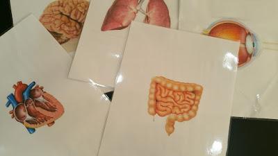 شرح أعضاء جسم الانسان وتنمية ذكاء الطفل