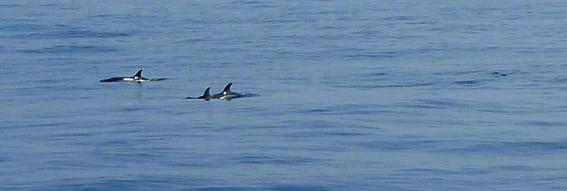 rencontre avec dauphins corse