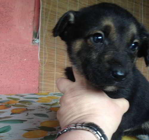 cachorro talla pequena 3