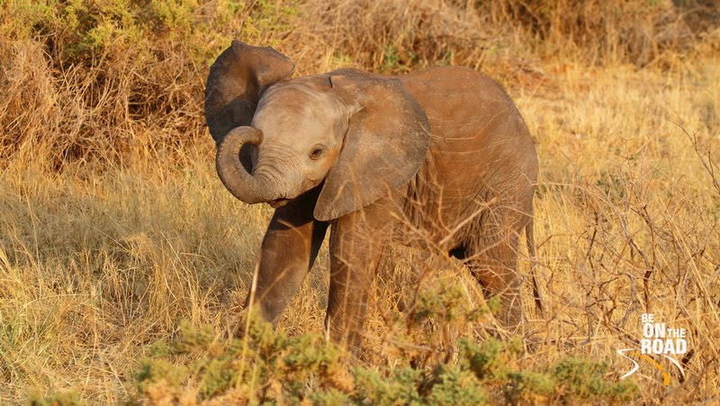 Adorable Wildlife of East Africa