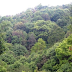 Tree Species Found in Hilly Region of Nepal