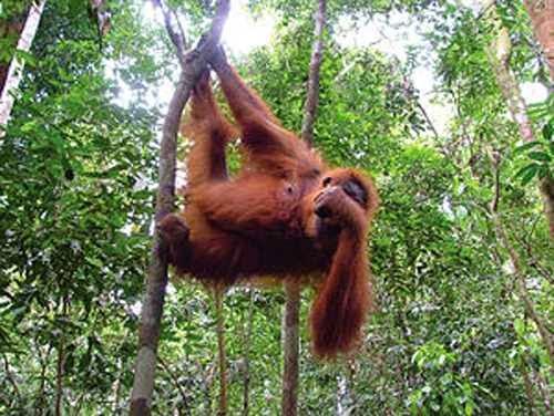 Bukit Lawang - Tempat wisata di sumatera utara