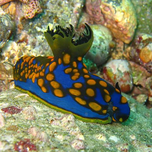 Hidupan Laut Yang Mempesonakan  Weird n Fun Ideas