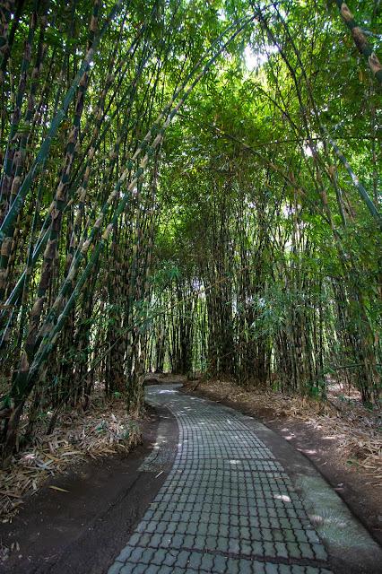Foresta di bambù nel villaggio tradizionale balinese di Penglipuran-Bali