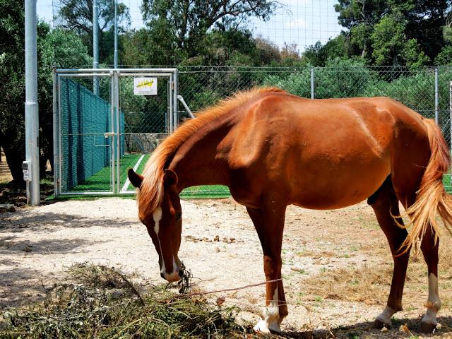 cavallo, puledro, animale, tenuta