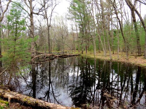 ephemeral wetland