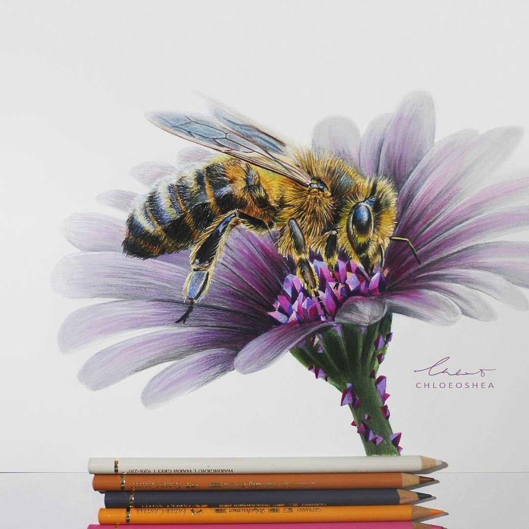 08-Honey-Bee-Chloe-O-Shea-Realistic-Wind-Animal-Drawings-www-designstack-co