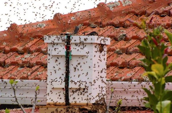 Σύλληψη αφεσμών με μια πανεύκολη παλιά συνταγή αλοιφής μελισσόχορτου