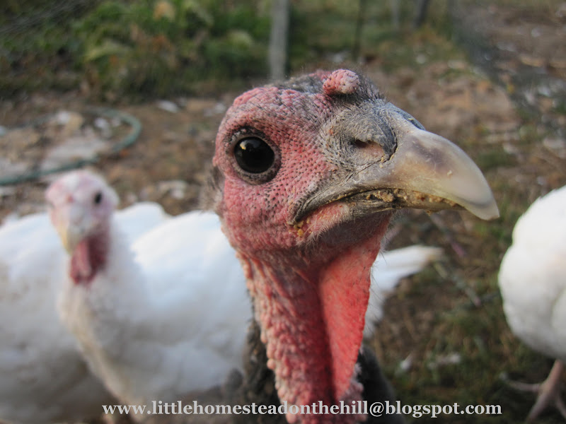 Chopping Chickens Heads And Indian Thanksgiving
