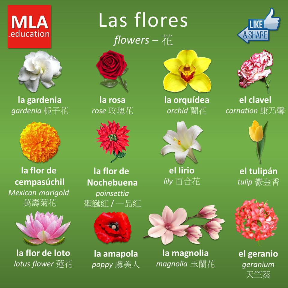 Qu viva el espa ol flores e insectos - Clase de flores y sus nombres ...