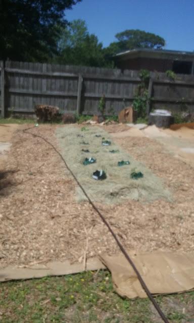 gardening zero waste less waste no plastic