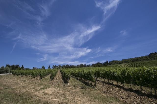 Borgo di Fonterutoli-Cantine Mazzei-Vigna