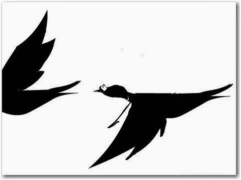 Flash Cara Membuat Animasi Burung Terbang