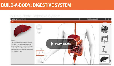 online human body systems digestive system game