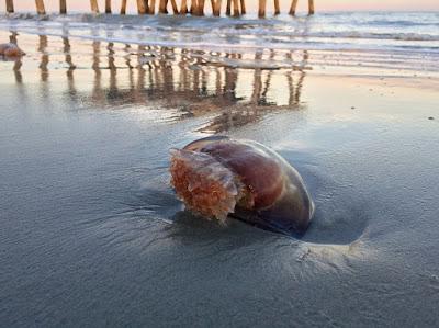 Dampak Aktivitas Manusia Terhadap Laut