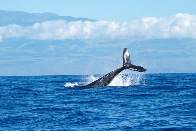 قيادة المحيط الأزرق - بيزنس بالمصرى