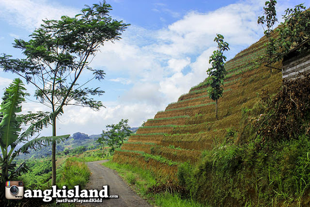 Desa Apuy