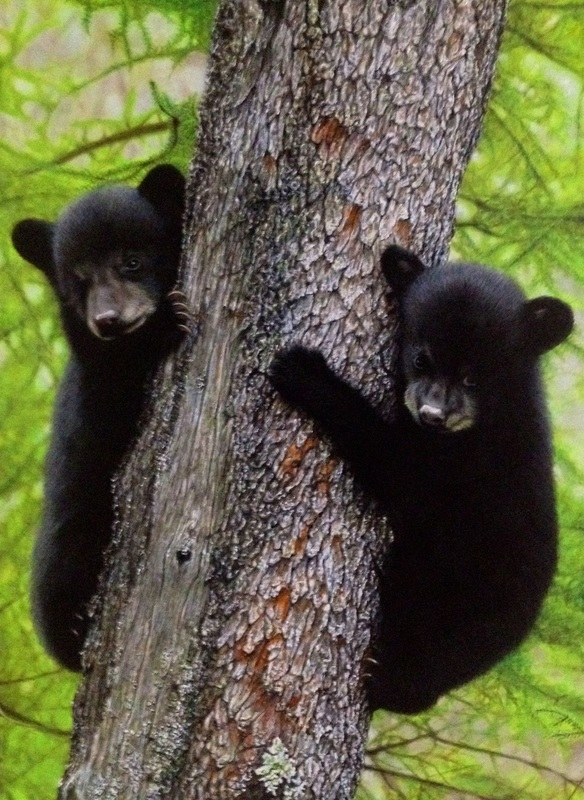 01-Black-Bear-Cubs-Nick-Sider-Realistic-Animal-Paintings-more-than-a-Photo-Image-www-designstack-co