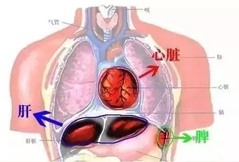 所有的淋巴結節疾病,都要疏肝,為什麼?(淋巴結按摩、促進排毒)