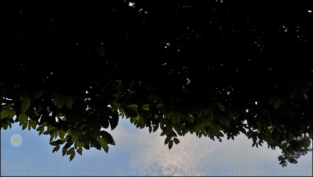 FeelHappyFeelGood Photography With Blue Sky and The Tree