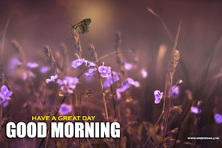 Good Morning Messages on Fresh flowers Butterfly Images.