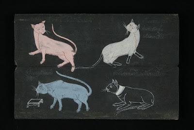 Siamese Cat Tamra Maew History