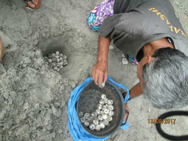 Konservasi Penyu Mentawai