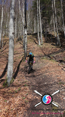 Biketouren in Scheffau