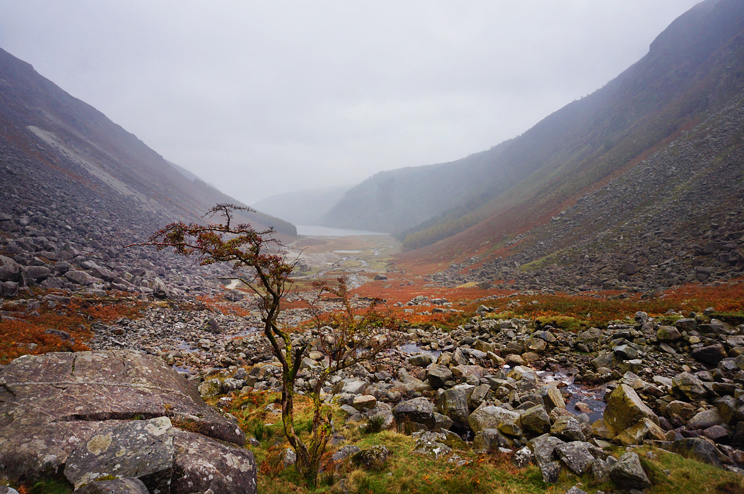 At the bottom of the Glendalough valley