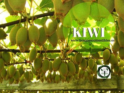 Guía para el Cultivo del Kiwi.