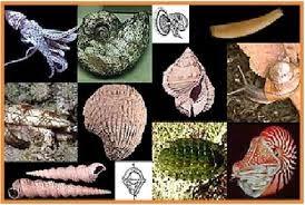 http://www.materisma.com/2014/06/penjelasan-ciri-klasifikasi-dan-peranan-mollusca.html
