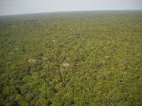 Floresta - Lei 13.452/17 Parque Nacional do Jamanxim e APA Rio Branco